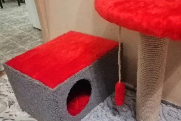 на фото мебель для домашних животных